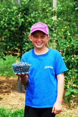Blueberry Festival - for blog post