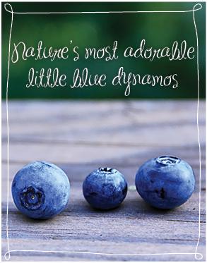 Meme - Natures little blue dynamos - 02-195
