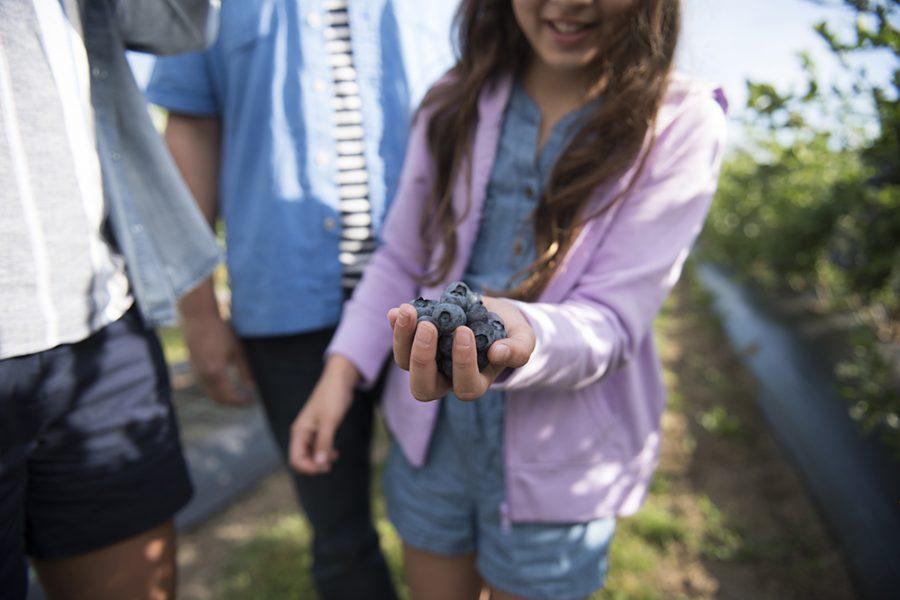 Family at blueberry festival