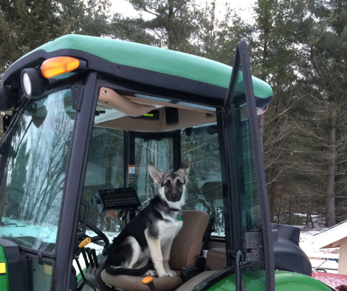 He's no truffle dog, but at Carini Farms, this pup is part of the team